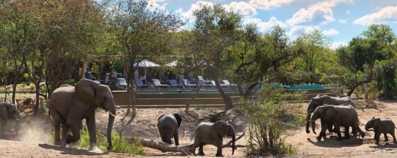 Timbavati   Ngala Safari Lodge