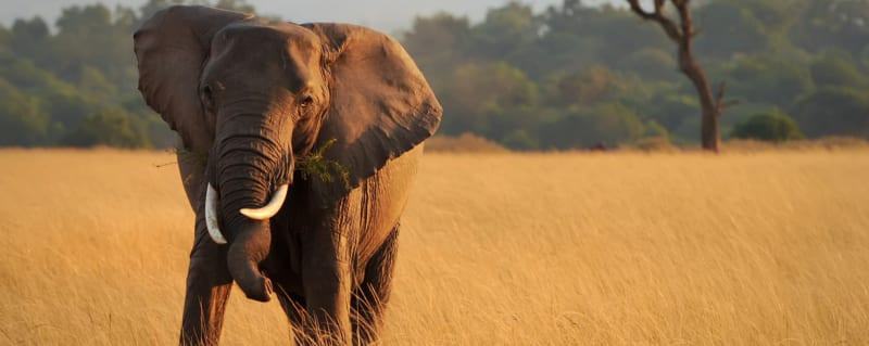 Best Places To See Elephants In Africa